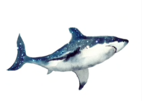 Omega Shark - pantip - รีวิว - พันทิป