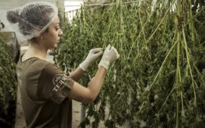 Cannabisvital Oil - หาซื้อได้ที่ไหน - ซื้อที่ไหน - ขายที่ไหน - original